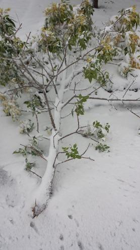 Snow Storm September 11 2014 (1)