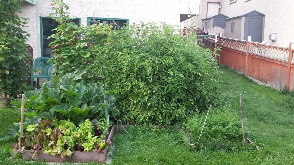 Garden August 27 2015 (1)