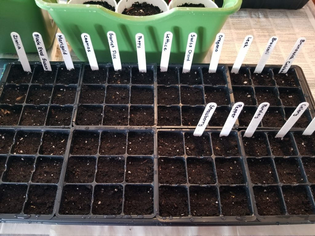 Seeds Veggies and Flowers